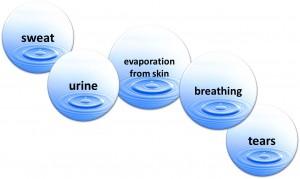 water evaporation