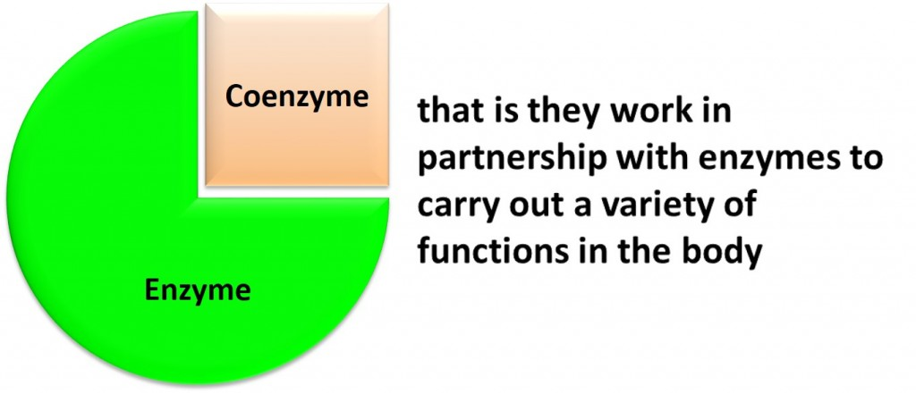 vitamins are coenzymes